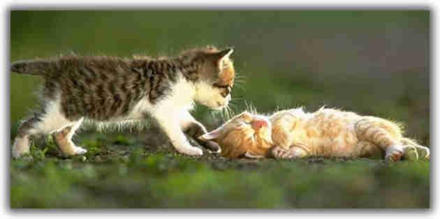 kitties_playing_friend.jpg